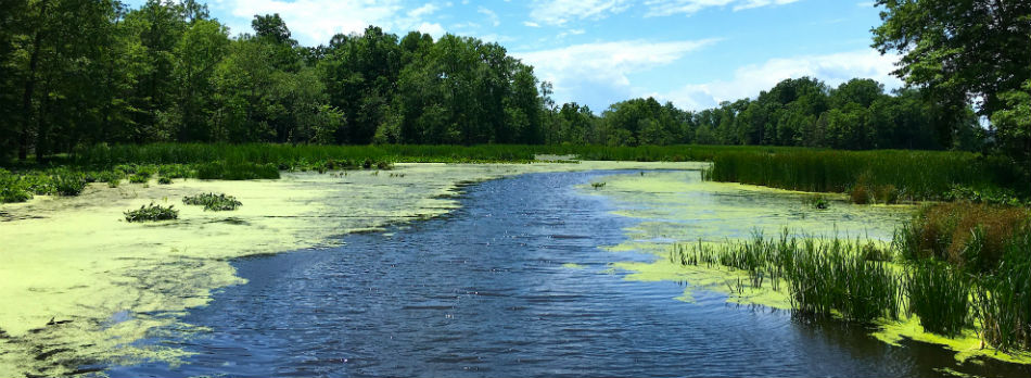 Exploring Great Swamp National Wildlife Refuge