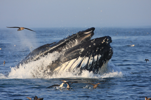 Whale Watch & Marine Education Series