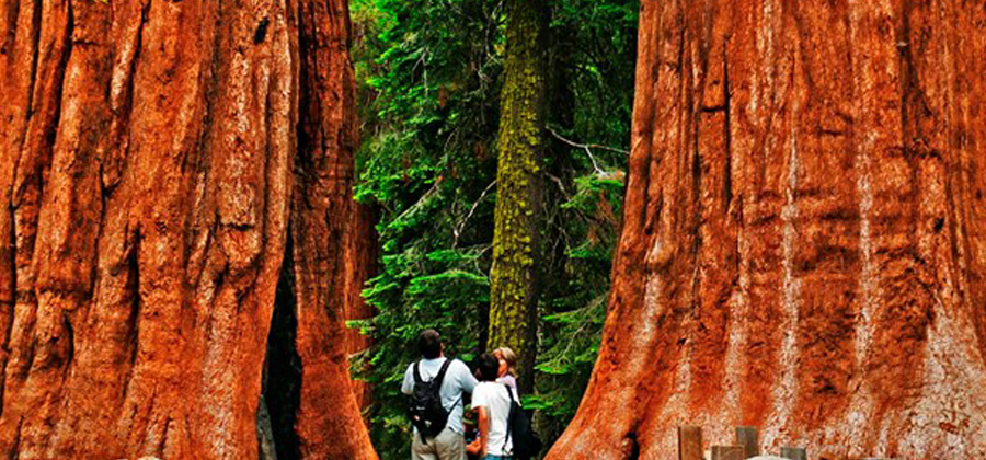 Exploring Sequoia National Park